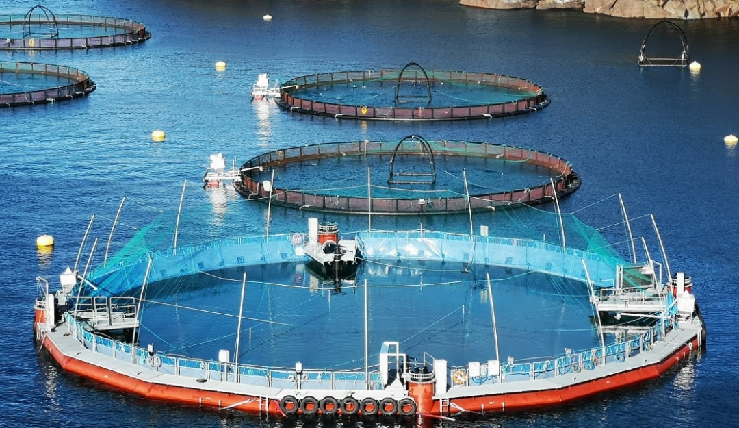 Flexible semi-closed cage in Norway